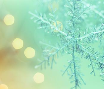 MP_Nov_Holiday-lights_blog.jpg