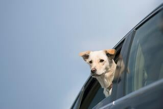 dog-in-a-car-accident