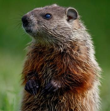 how-to-choose-milwaukee-personal-injury-attorney-groundhog-day.jpg