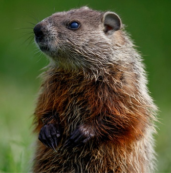 how-to-choose-milwaukee-personal-injury-attorney-groundhog-day.jpg