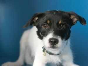 Wisconsin's Dog Statute