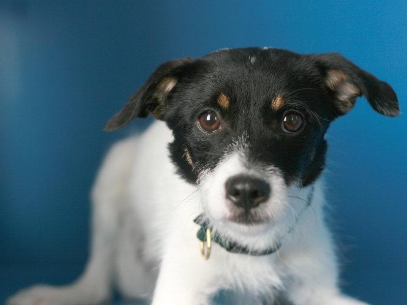 milwaukee-dog-injury-dog-bite-attorneys.jpg